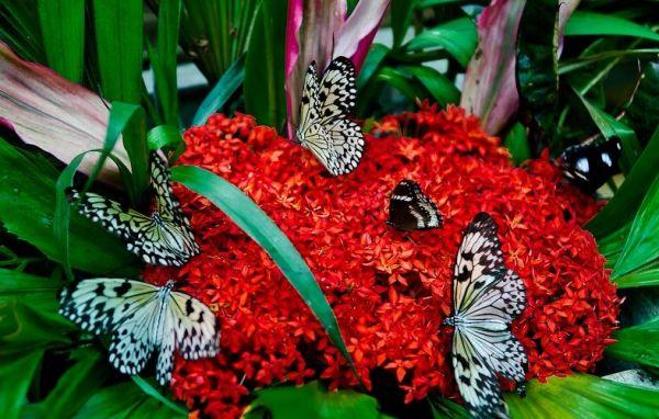 Vương quốc côn trùng
