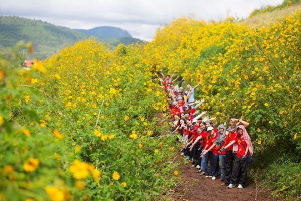 Ngắm hoa dã quỳ nở tại Đà Lạt