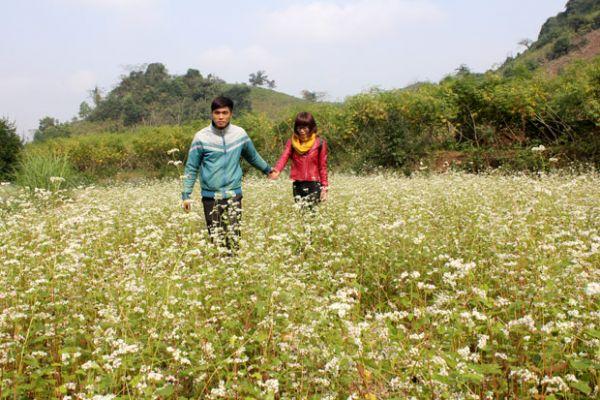 Lên Mộc Châu ngắm hoa cải trắng