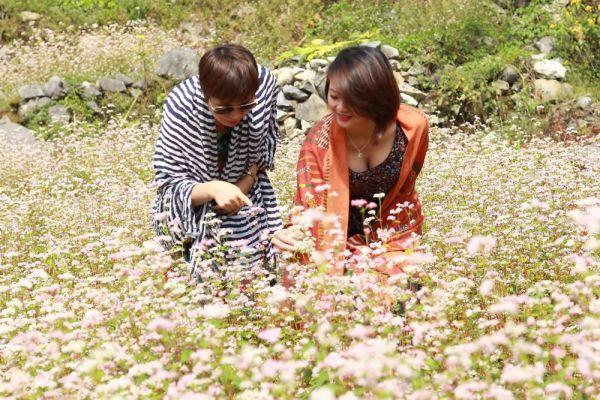 Về Hà Giang ngắm hoa tam giác mạch